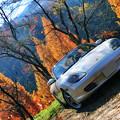 写真: 秋のドライブ