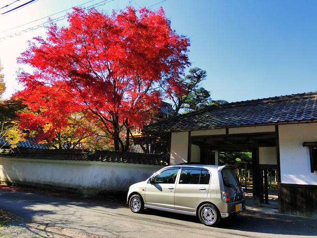 本誓寺の紅葉