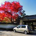 写真: 本誓寺の紅葉