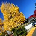写真: 本誓寺
