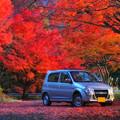 Photos: 紅葉盛り