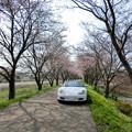 Photos: 秘密の桜並木