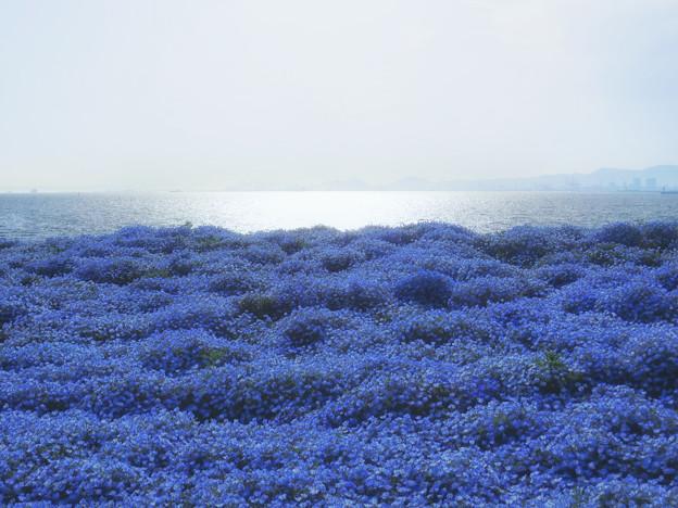 空の青、海の青、花の青