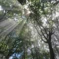 Photos: 森の光芒