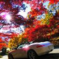 Photos: 初秋の昼下がり