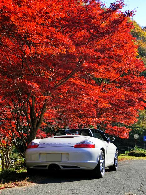 Photos: 真紅の樹の下