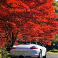 真紅の樹の下