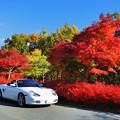 Photos: 紅葉とドウダンツツジ