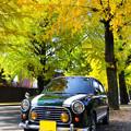 Photos: 天理の銀杏