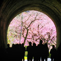 Photos: 桜を見るかい?