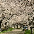 桜並木ジーノ