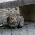 Photos: ディオクレアヌス浴場跡の猫