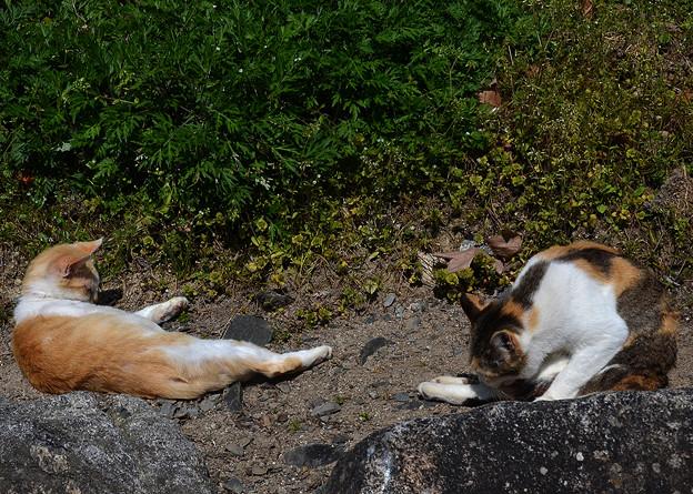 唐津城の猫