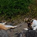Photos: 唐津城の猫