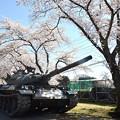 写真: 桜と戦車