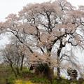 Photos: 高柴デコ屋敷の奥