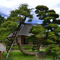 Photos: 別名鶴の松