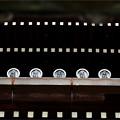 写真: 南禅寺法堂軒丸瓦