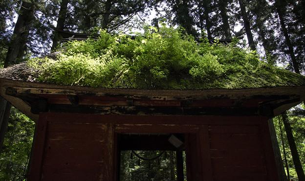写真: 苔に覆われた随身門