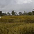 草紅葉の湿原の入り口