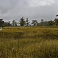 写真: 草紅葉の湿原の入り口