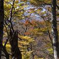 滝展望台への道