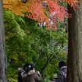 Photos: 紅葉の下でコンビニ弁当