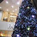 写真: クリスマスツリー2011