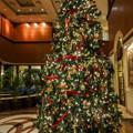 写真: 記念日のクリスマスツリー