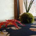 Photos: 窓辺の苔玉