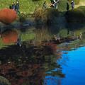 写真: 池のほとり