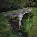 廃道の橋を草が渡る