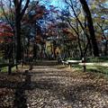 Photos: 秋ですが