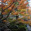 温泉宿の中庭