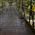 雨の吊り橋