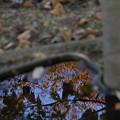 水飲み場の紅葉