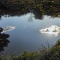 Photos: 池に浮かぶ雲