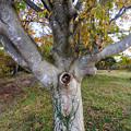 Photos: 一つ目の木