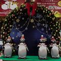 Photos: ペンギンサンタのクリスマス