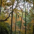 Photos: 竹林から
