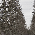Photos: それぞれの並木