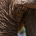 Photos: アフリカゾウ
