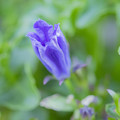 Photos: 開花レース 私が一番