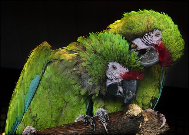 Photos: インコの眼力