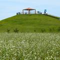 Photos: そば畑と避難丘