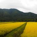 Photos: 山里の稔りの車窓