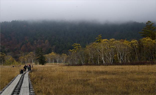 Photos: 木道を行く