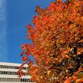 ビル前広場の紅葉