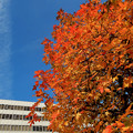 Photos: ビル前広場の紅葉