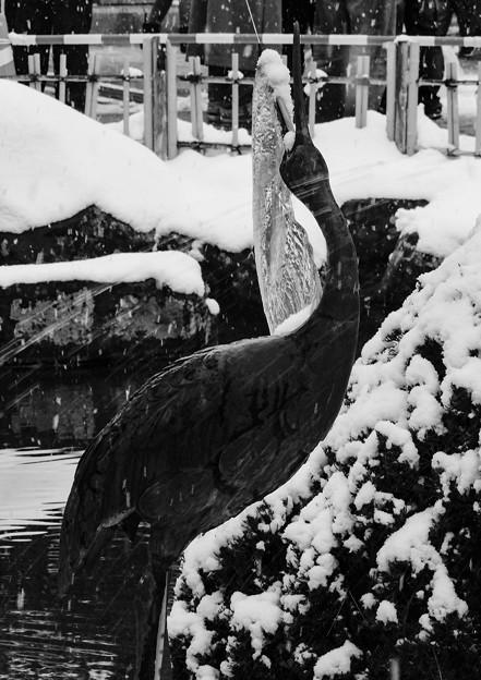 鶴の嘴に氷柱